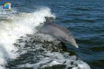 Lire la suite: Le chant des dauphins Djerba